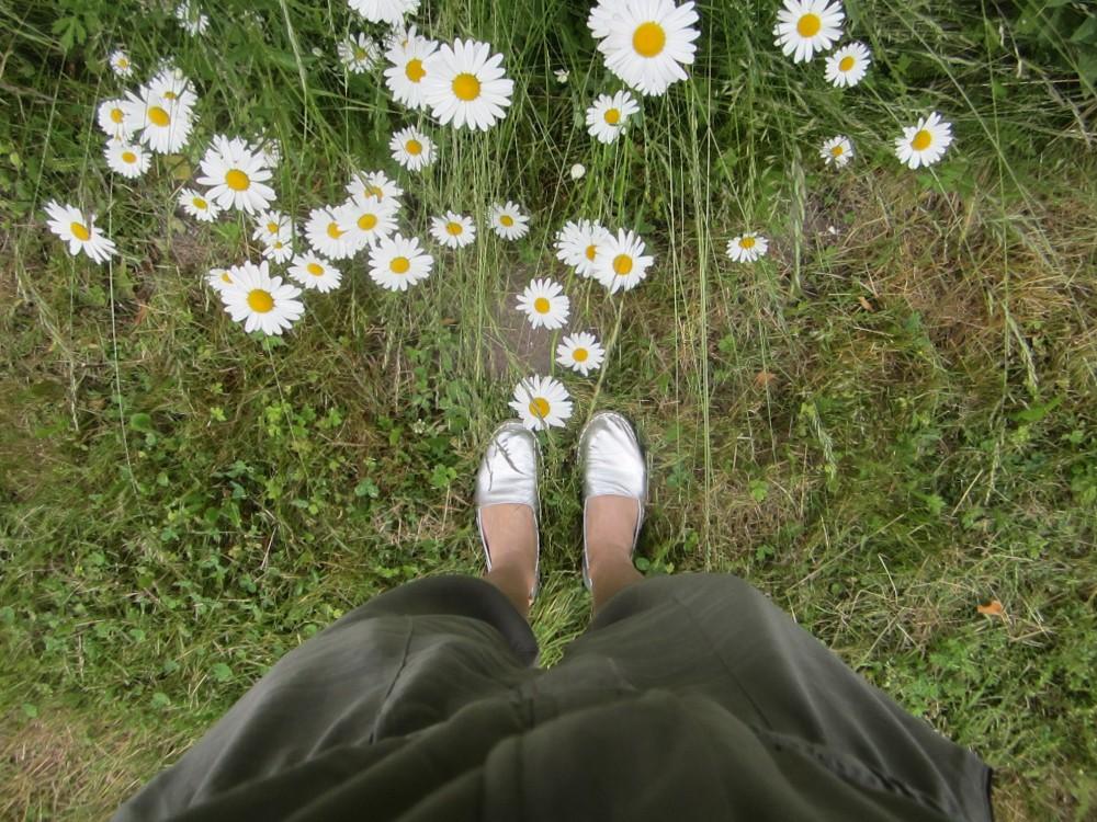 Margeriten säumen die Wege in Weissenhaus