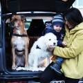 BMW i3 mit eDrive <br> Das Fahrerlebnis