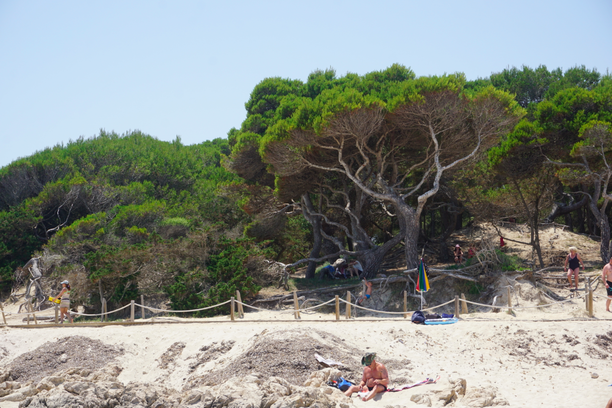 Cala Agulla bei Travel with Kids Mallorca