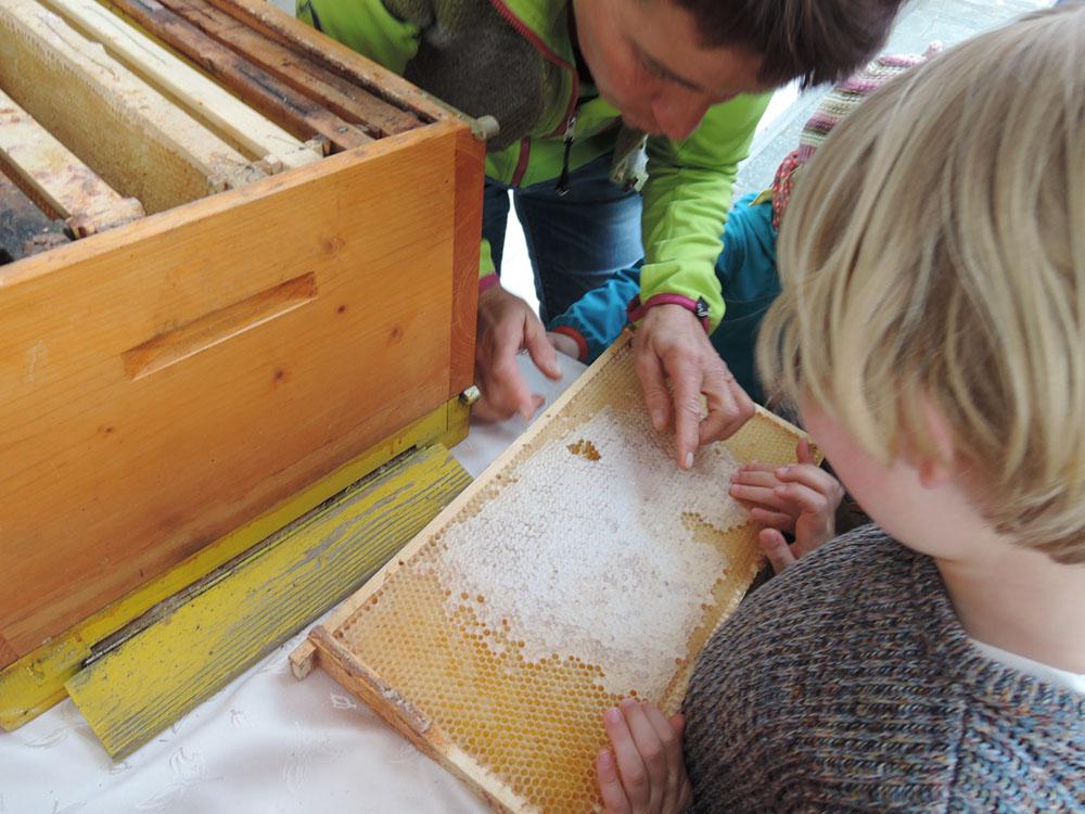 Als Naturdetektiv auf Spurensuche <br> Hotel Sonnenwies in Südtirol