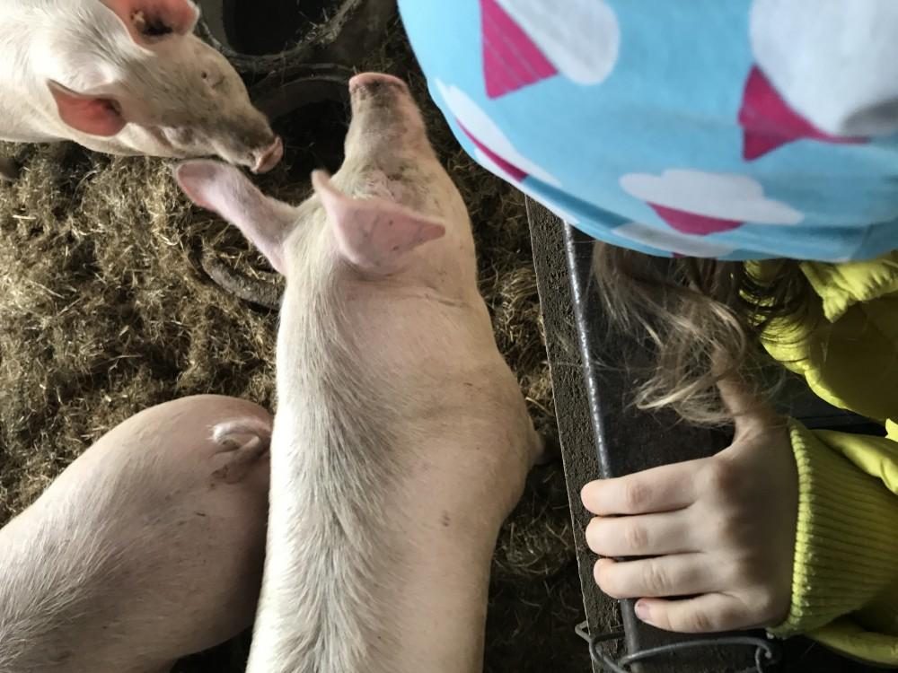Kind und Schweine Bauernhof