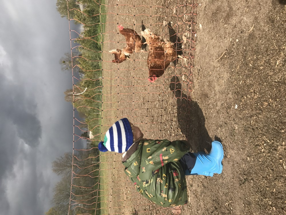 Kinder und Huehner Bauernhof