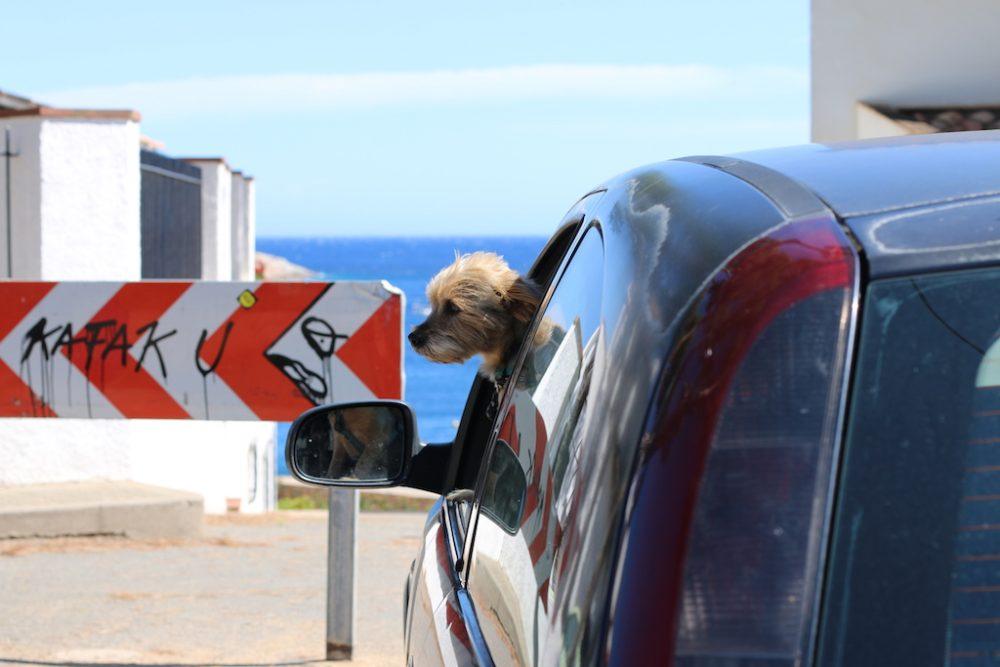 Costa_Brava_Ausflugstipps_Familie_Mummy_Mag_1051_Hund im Auto
