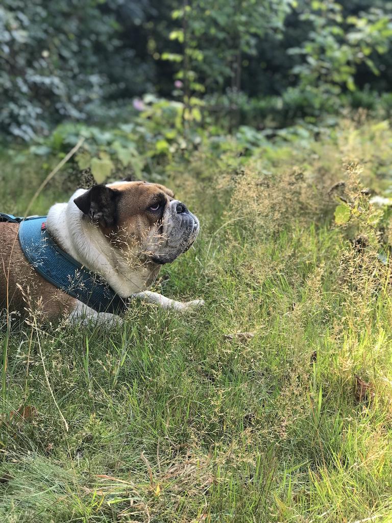 Hund winnie im Garten von Kate Glitter
