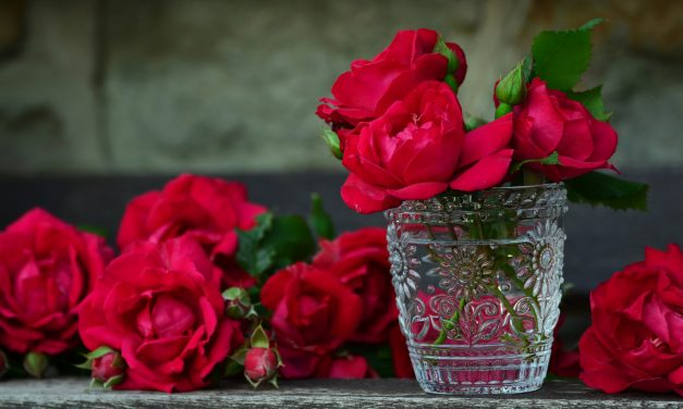 Roses Revolution <br/> Ein Appell zu mehr Sensibilität im Kreißsaal