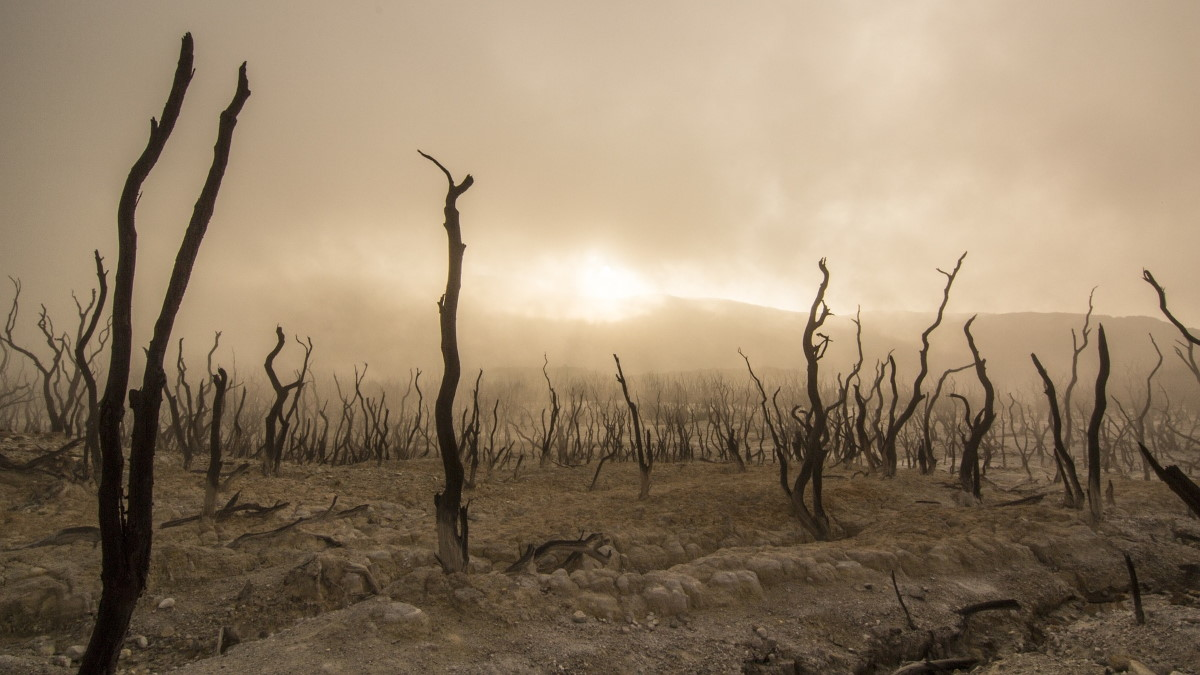 MUMMY MAG Klimawandel Kahle Bäume