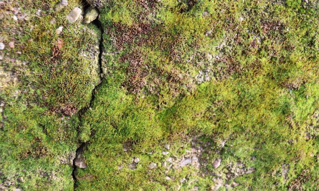 Biodiversität: der leise Abschied der Vielfalt